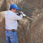 Do the Math First Before Purchasing Feed to Supplement Hay