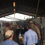 Heifer Development Field Day – January 9