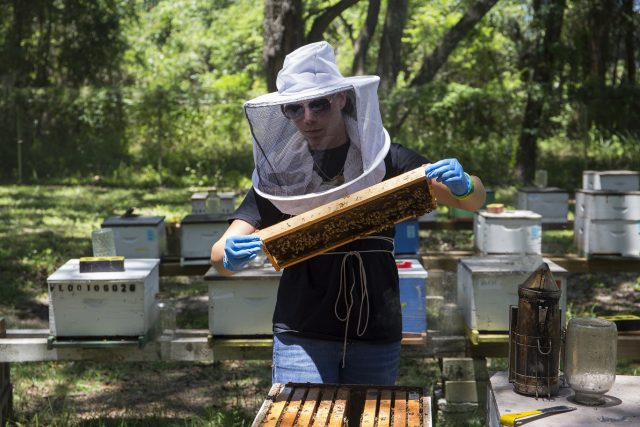 Panhandle Beekeeping Activities Ramping Up for the New Season