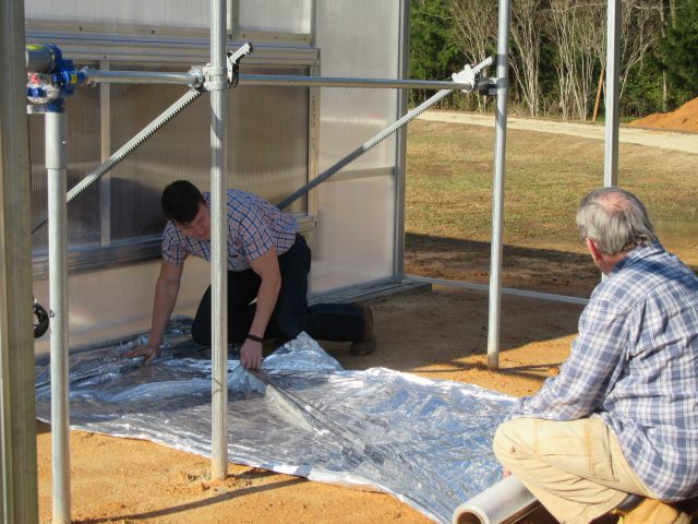 Reflective mulch being installed near the cooling pad area of a greenhouse.