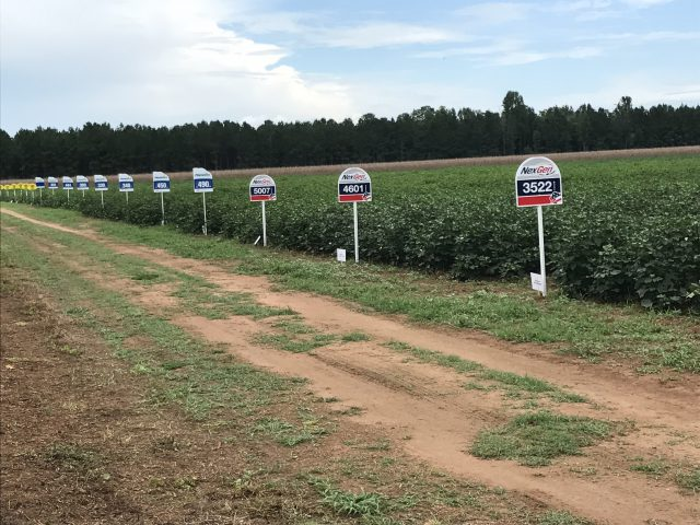 2017 UF/IFAS Cotton Variety Trial Results