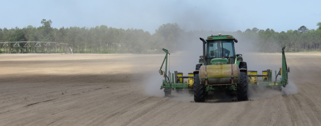 Thinking About Planting Peanuts in April?  Pay Attention to Soil Temperature
