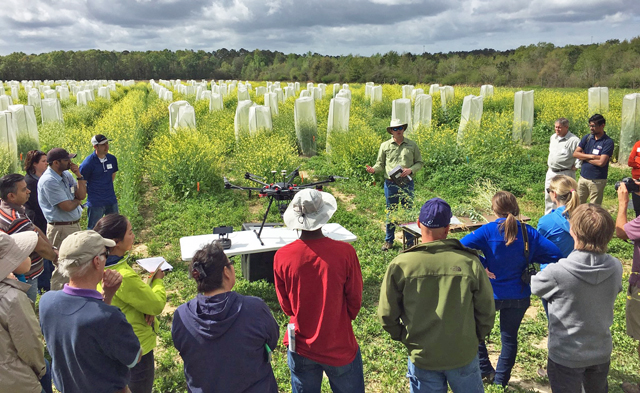 Scientists Share Latest Research and Production Tips at Carinata Field Days Across the Southeast