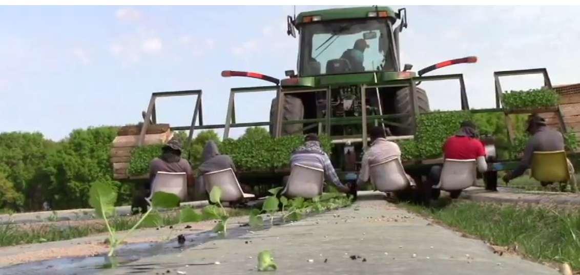 Friday Feature:  Melon Planting Equipment Demonstration