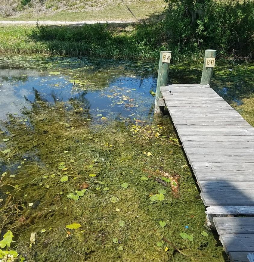Grass Carp – A Biological Control to Manage Pond Weeds