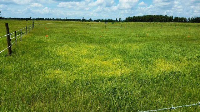 Summer is the Time to Scout for Forage Diseases