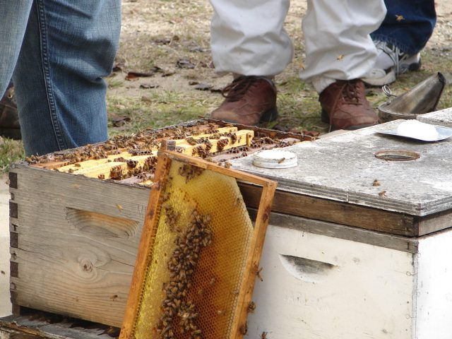 2017-2018 Bee Informed Partnership's National Bee Colony Loss Report