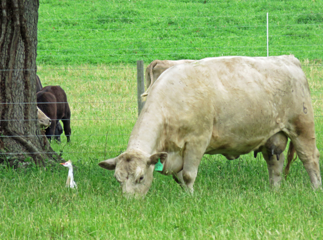 Northwest Florida Grazing School – September 14