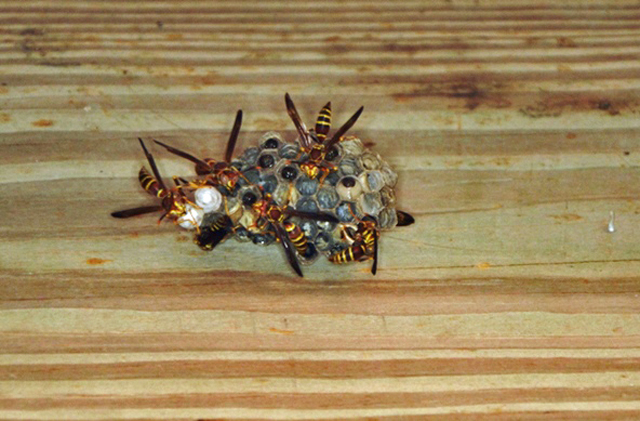 Barn Bugs: Insects in the Outbuildings Can Still Be a Problem