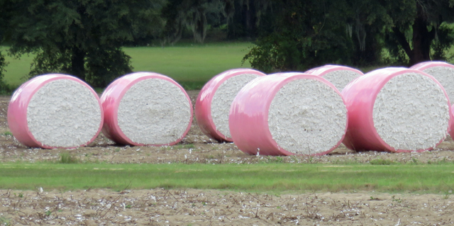 Cotton Marketing News:  Extraneous Matter—The Plastics Issue