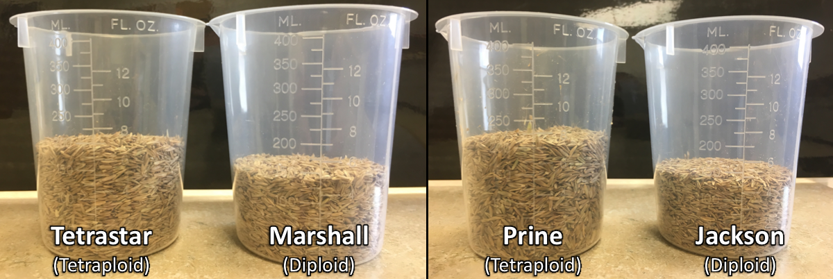 Time to Order Winter Forage Seed and Ryegrass Seed Comparison