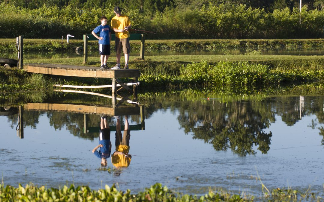 Maintaining Dissolved Oxygen Levels in Your Pond to Reduce Fish Kills