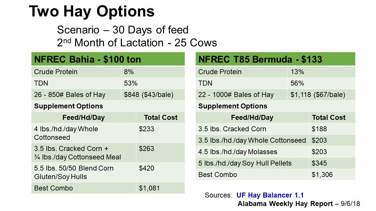 Precision Feeding After a Challenging Hay Season | Panhandle