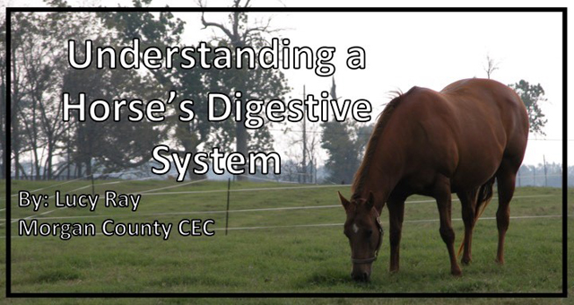Understanding a Horse's Digestive System