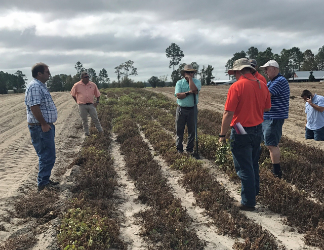 A region-wide tour of peanut collapse took place