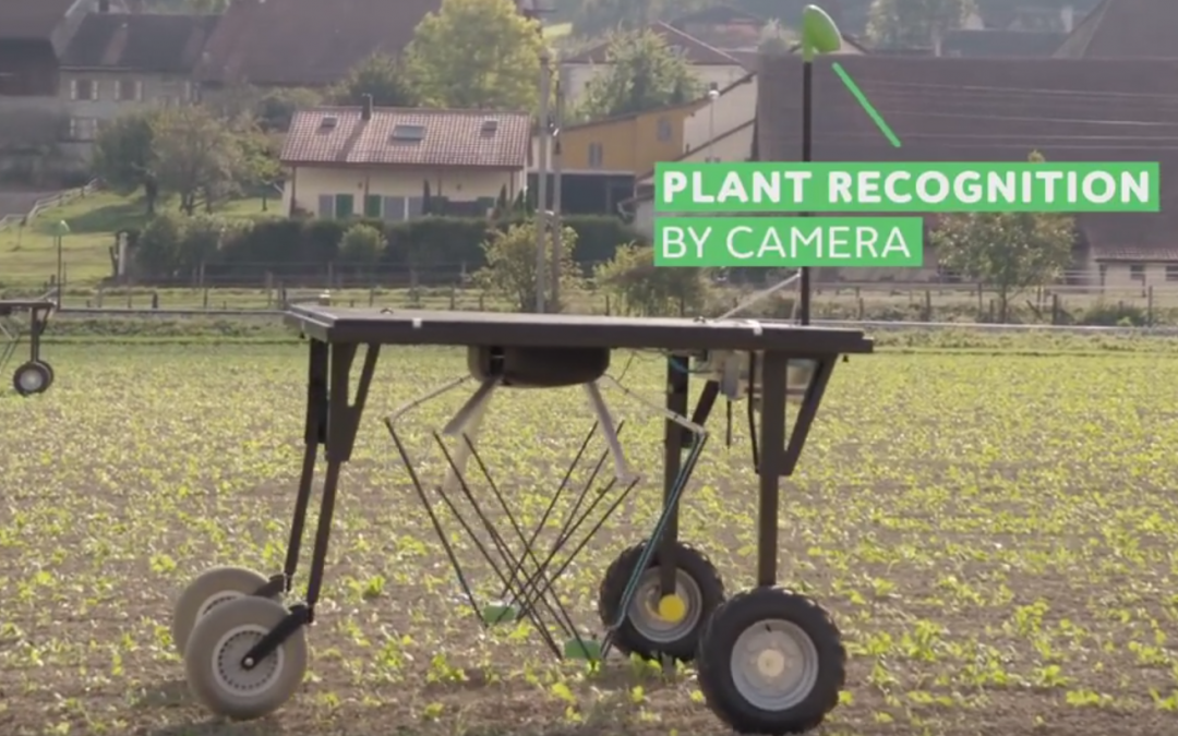Friday Feature:  Weed-Killing Robots