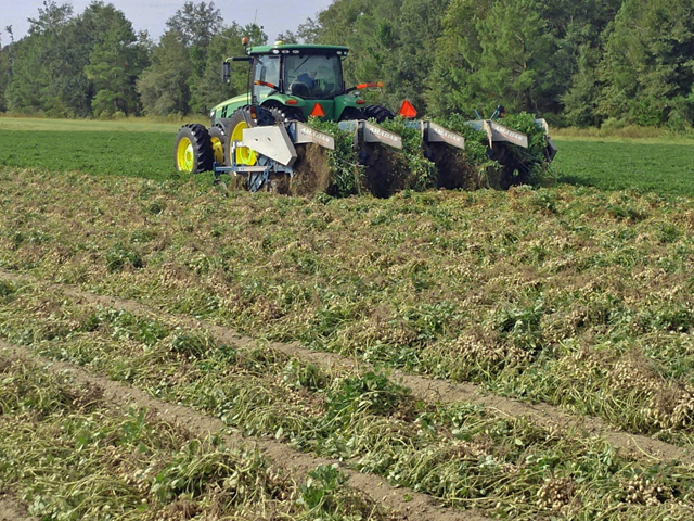 To Dig or Not to Dig: Optimizing Peanut Digging Decisions in the Presence of Leaf Spot Defoliation