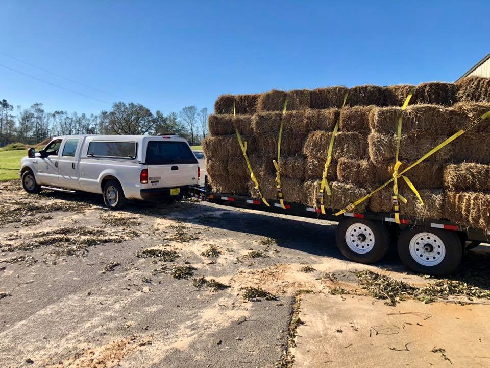 Extension Agents and volunteers help deliver needed supplies to livestock producers after Hurricane Michael