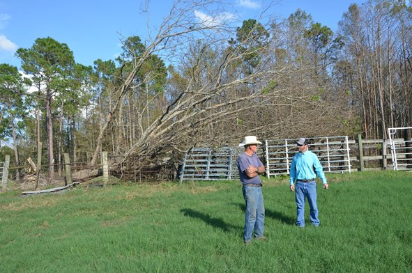 Extension Agents Work to Accurately Measure Hurricane Michael Damage