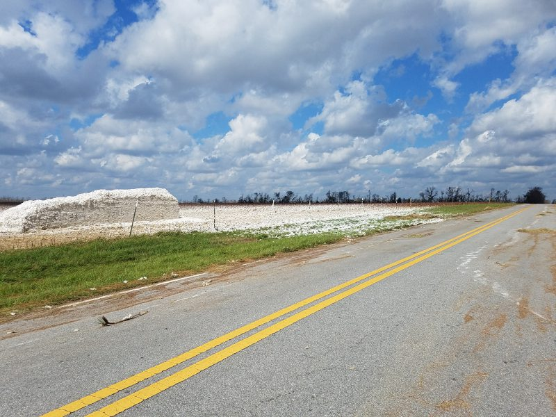 One of many cotton modules destroyed by Hurricane Michael.