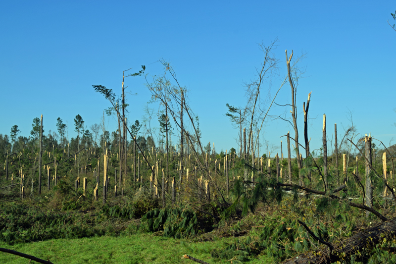 $380 Million in USDA Disaster Relief for Panhandle Timber Producers & Irrigated Crop Farmers