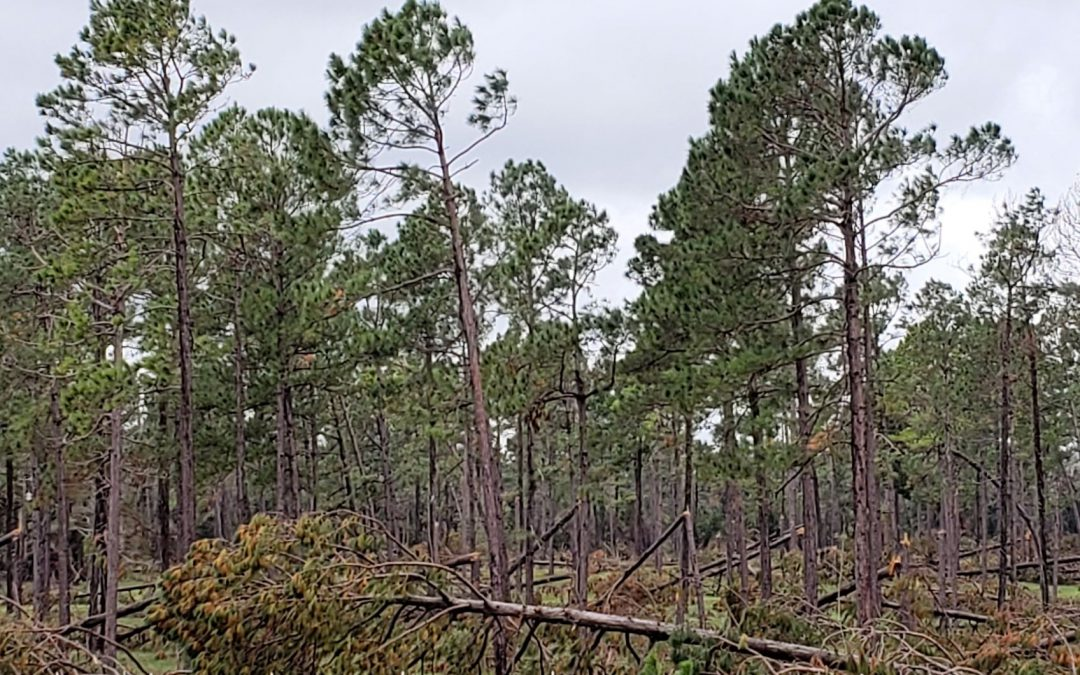 Hurricane Impacted Timberlands – Availble Resources