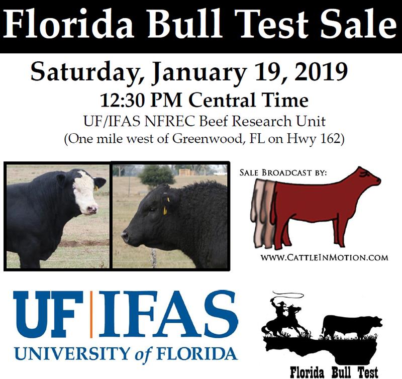 19 Bull test sale graphic