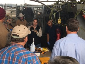 Group of cattle producers learning about CIDR for AI with lady talking.