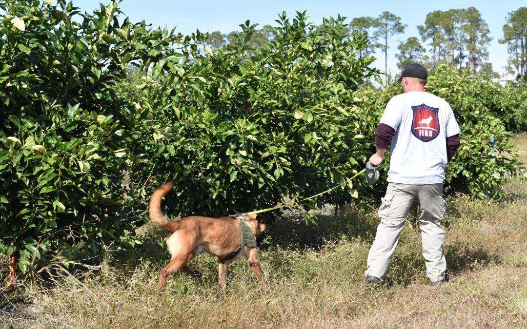 Using Man's Best Friend to Detect Citrus Greening