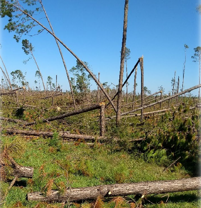 Forestry Hurricane Recovery Workshop  – February 12