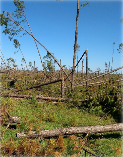Timber Hurricane Damage