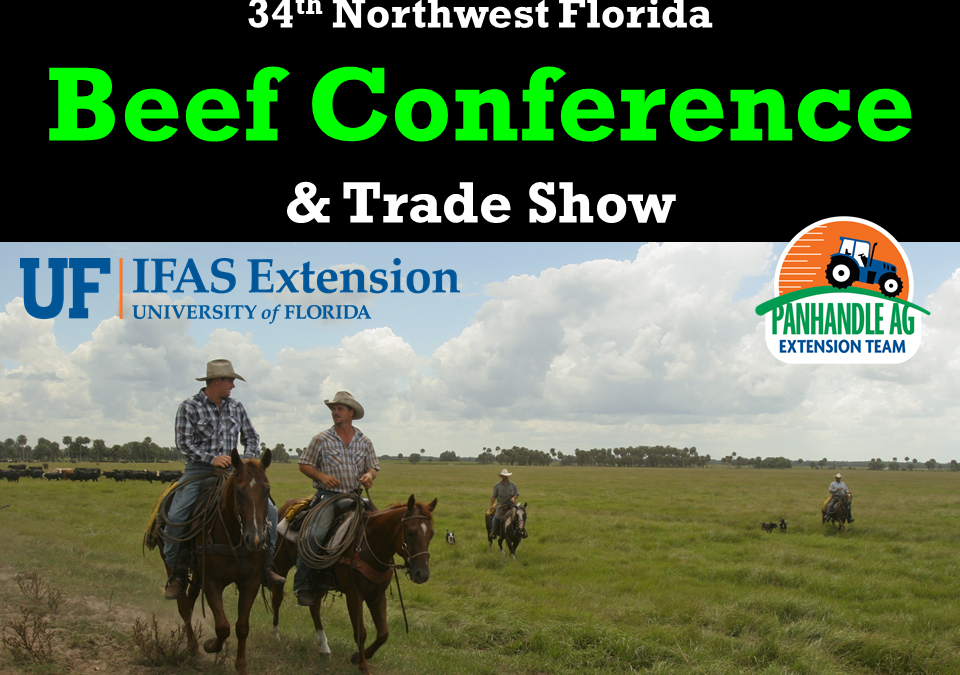 2019 Beef Conference Summary with Links to Presentations