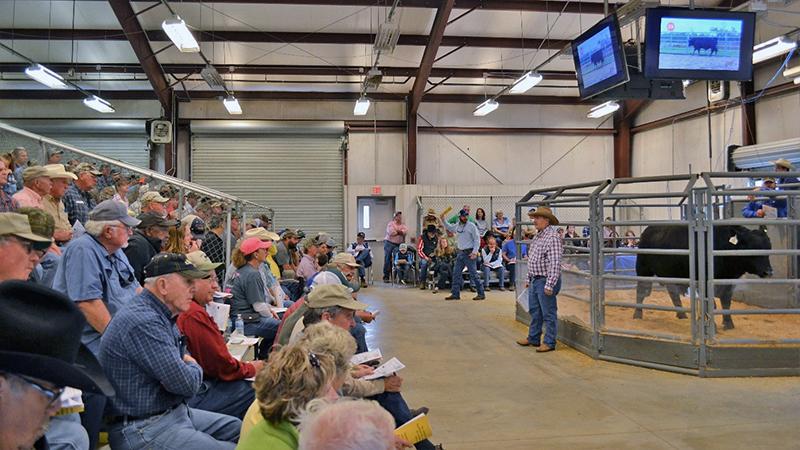 Summary of the 2018-19 Florida Bull Test & Bull Sale