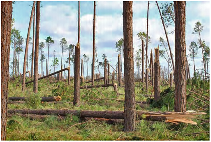 Forest Recovery Webinar Series to Aid Forest Landowners with Hurricane Michael Restoration Decisions