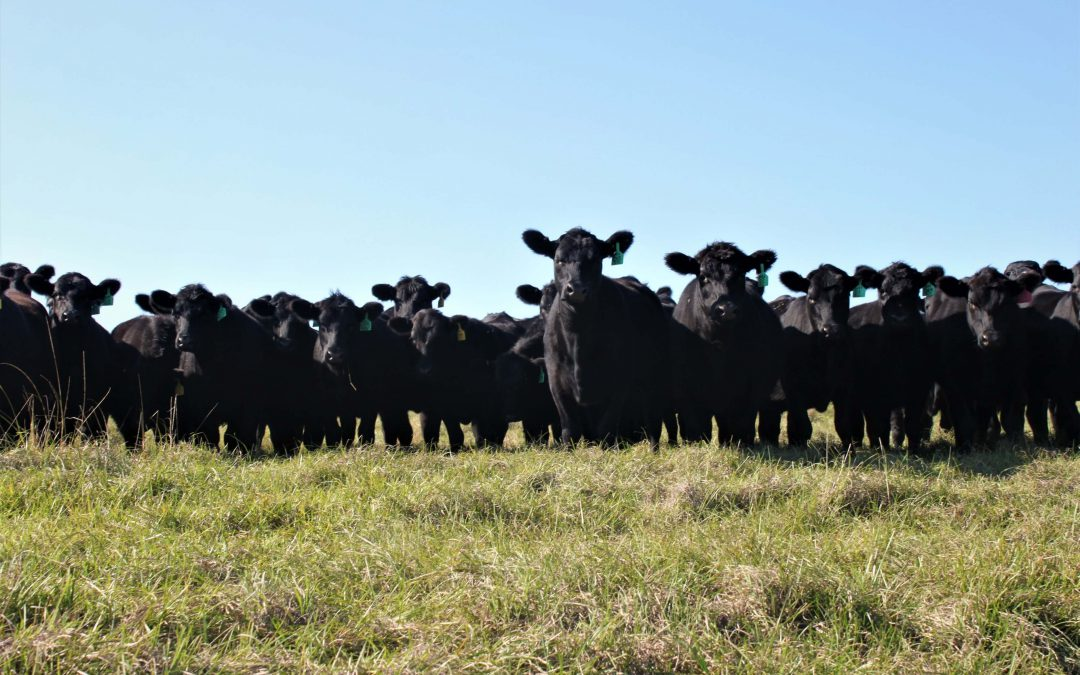 Escambia County Beef Cattle & Forage Bootcamp – March 2
