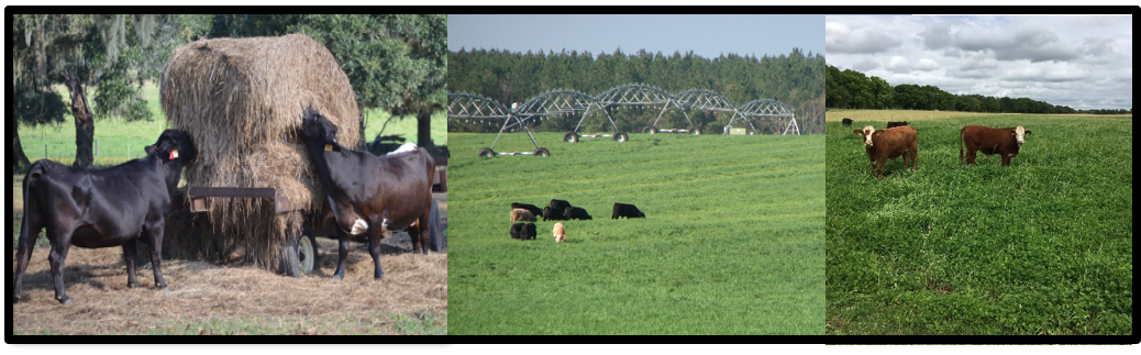 NFREC Beef & Forage Field Day – March 15