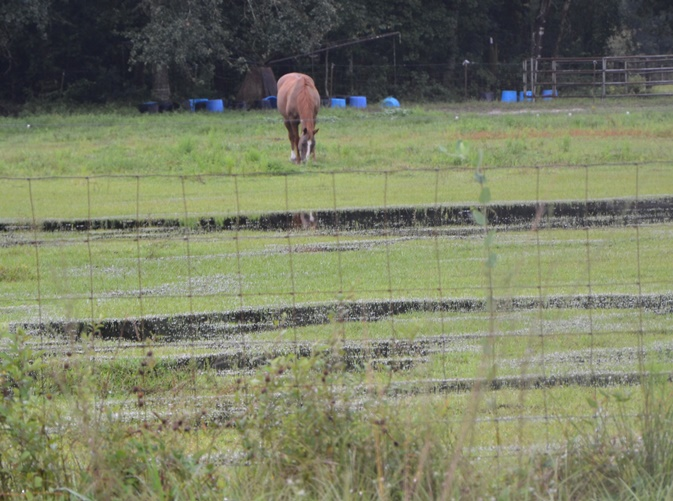 Horse Hooves Need Extra Care in Wet Pastures