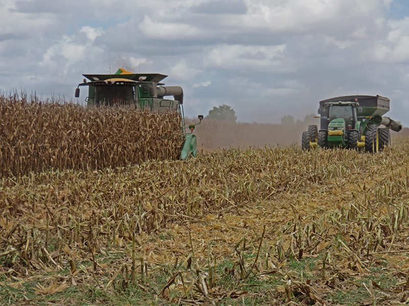 Friday Feature:  National Corn Yield Contest