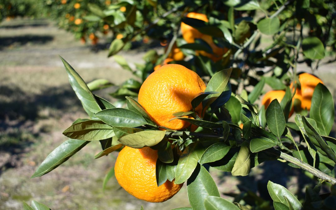 Citrus Health Forum – April 18