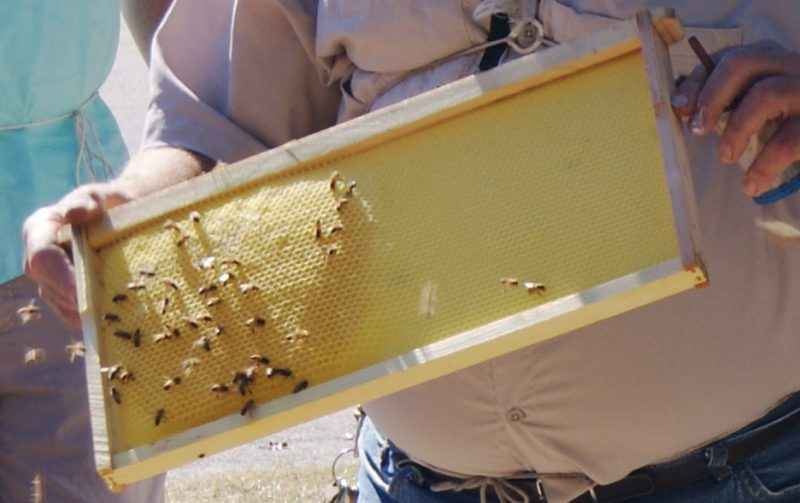 Panhandle Beekeepers Workshop and Trade Show – March 29 & 30