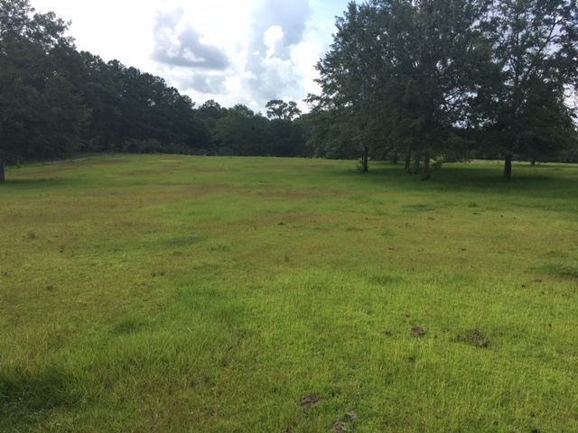 Renovating Centipede Grass Infested Pastures