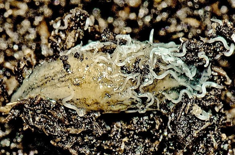 Healthy Soil is Teeming with Microscopic Life