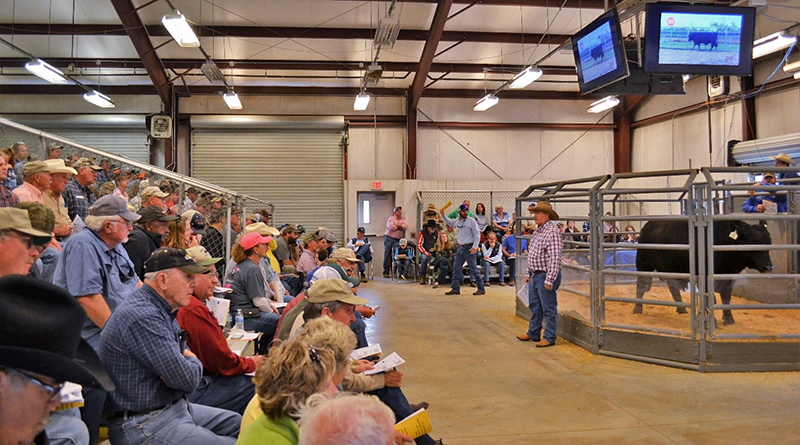 Highlights from the 2019 Florida Bull Test Sale
