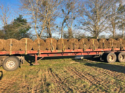 Harvesting Bahiagrass Sod for Extra Ranch Income