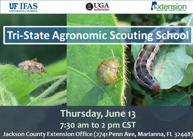 Tri-State Agronomic Scouting School – June 13