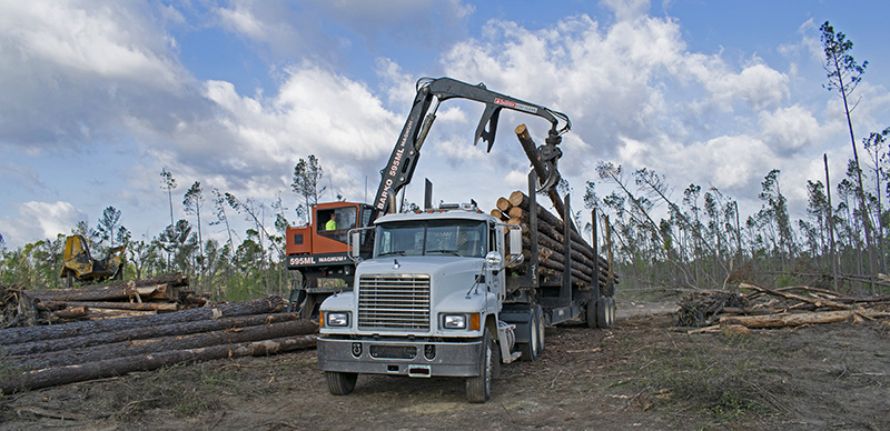 Timber Salvage Harvest Operation