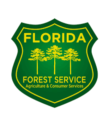 Financial Assistance Available to Private Forest Landowners for Southern Pine Beetle Prevention