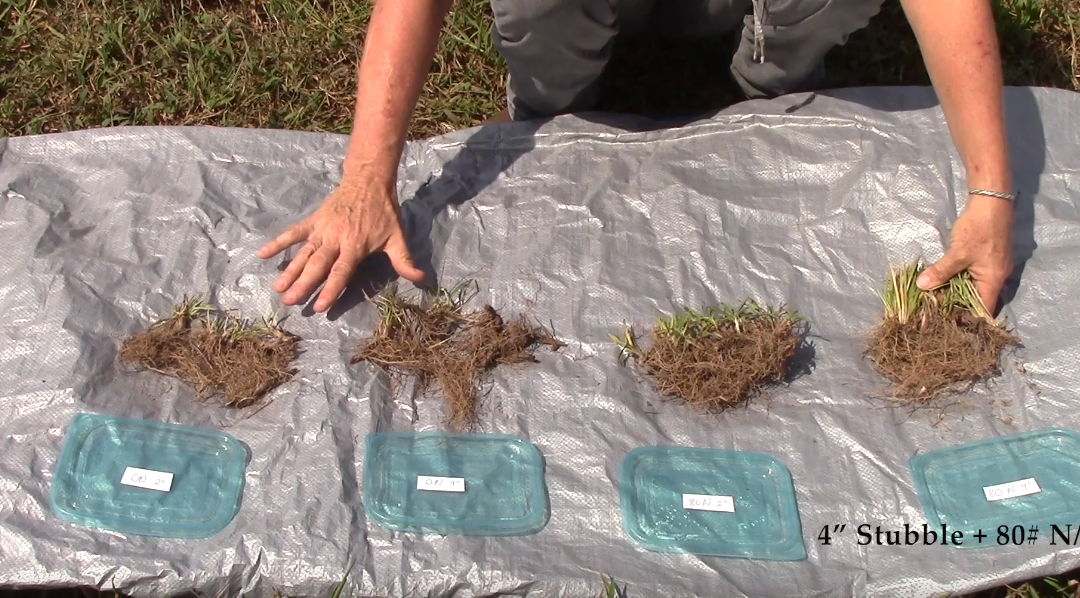 Friday Feature:  Improving Mature Bahiagrass Quality with Grazing Management