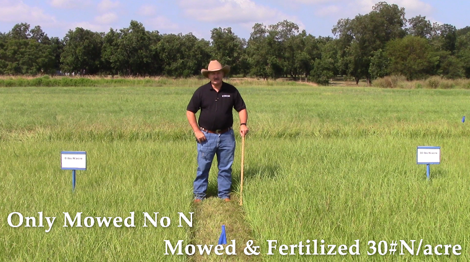 Friday Feature:  Improving Mature Bahiagrass Quality