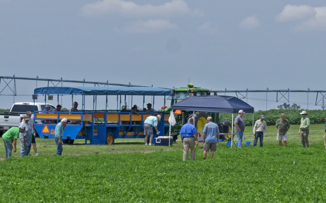 Friday Feature:  Highlights from the 2019 UF Peanut Field Day